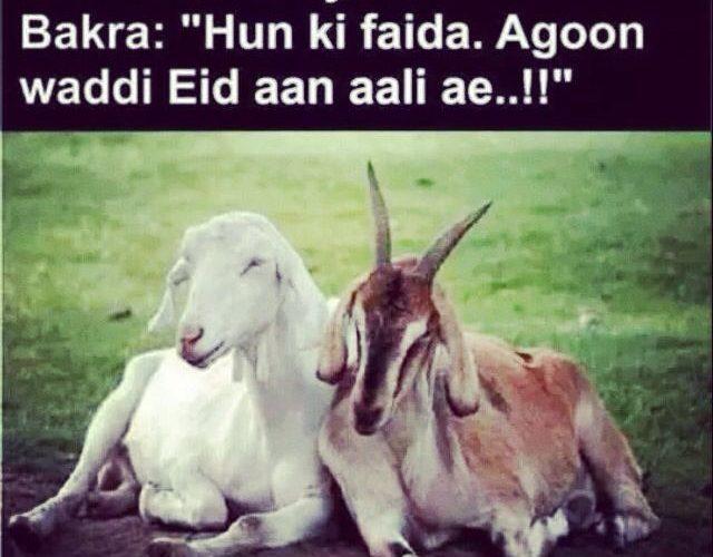 Mera To Apna BAKRA Koi Khol Kar Le Gaya | Bakra Eid 2020 Sms