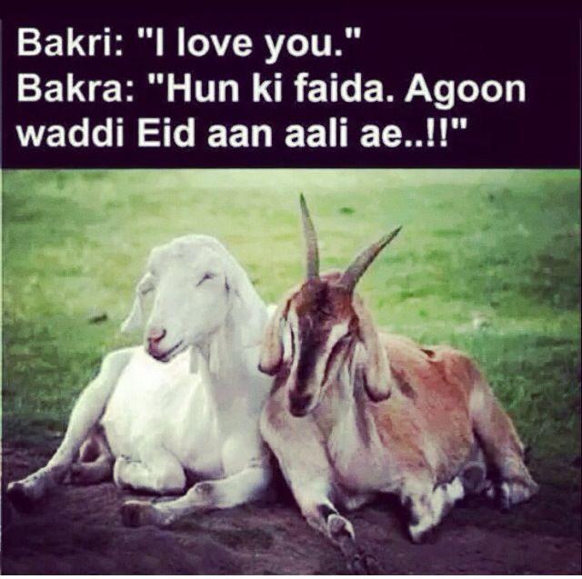 bakra-eid-mubarak-poetry-funny-2020